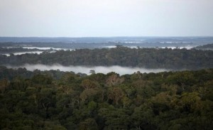 Possible Solution for the Deforestation: Make 'Good Stuff' Cheaper