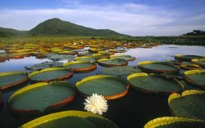 Pantanal Matogrossense: Um Show de Cores no Horizonte Aberto