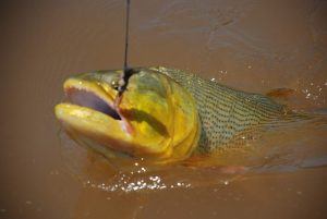 Sport Fishing and Angling in Brazil