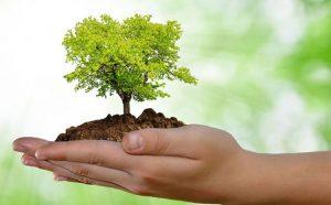 Preservação do Meio Ambiente e da Autoestima