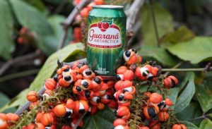 Brazilian Guaraná: Numbers and Facts